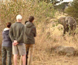 Asilia Sayari Camp walking safari