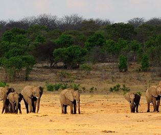Getty elephant in Hwange NP