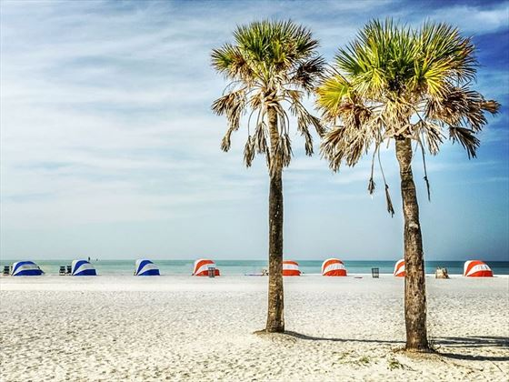 Iconic palms of Clearwater Beach, Florida