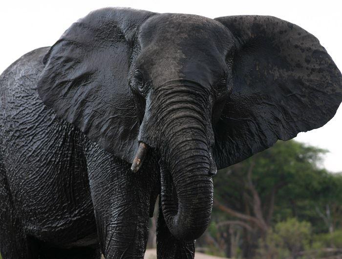 Jenn O'Neill elephant in South Africa