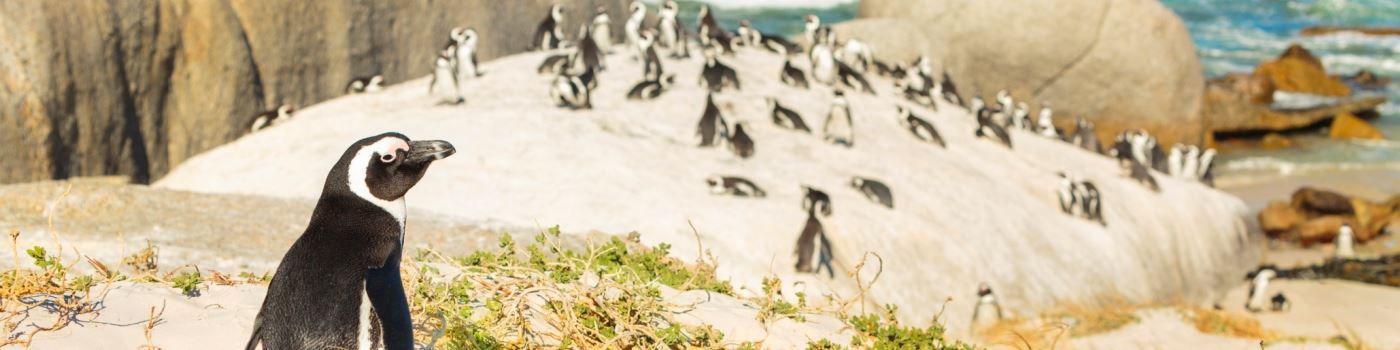 Getty image - Boulders Beach