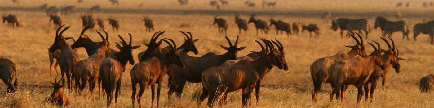 Katuma Bush Lodge wildlifein Katavi National Park