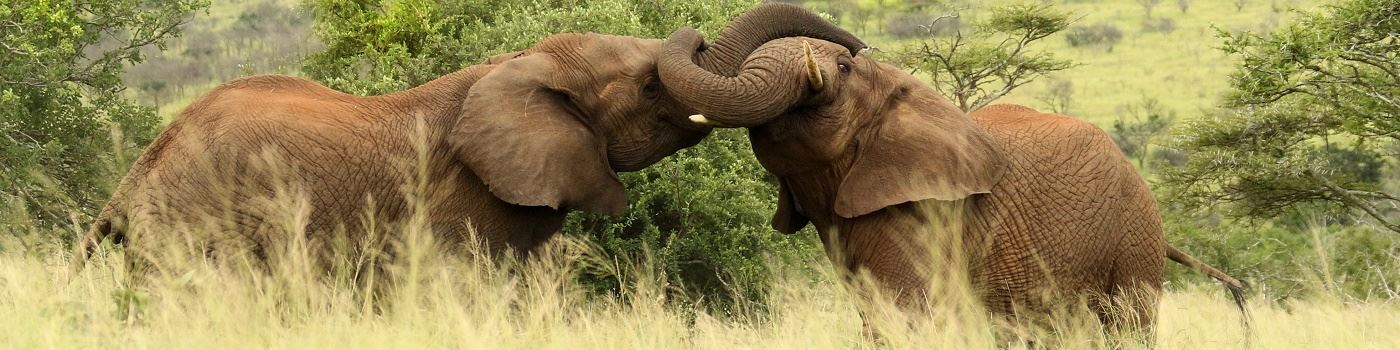 Thanda Private Game Reserve elephants