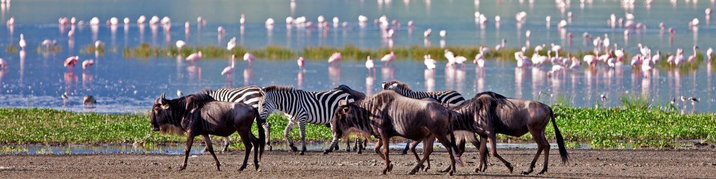 The Highlands Ngorongoro wildlife