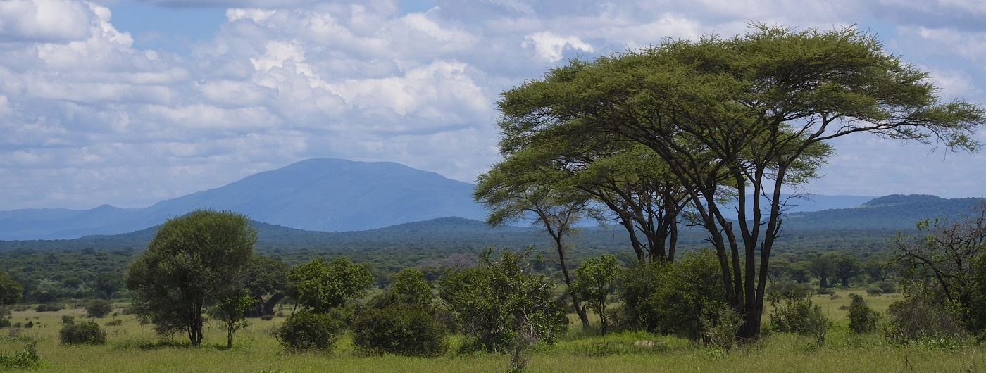 Getty image of Ruaha National Park