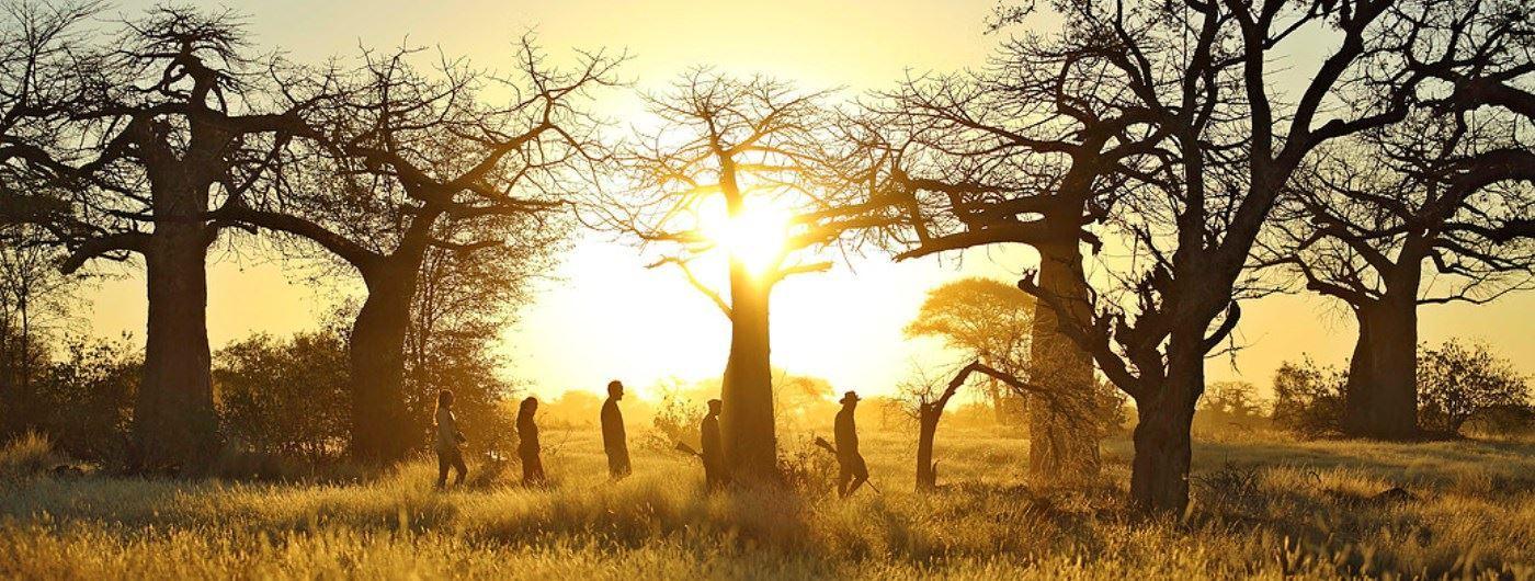 Kichaka Safari Camp walking safari