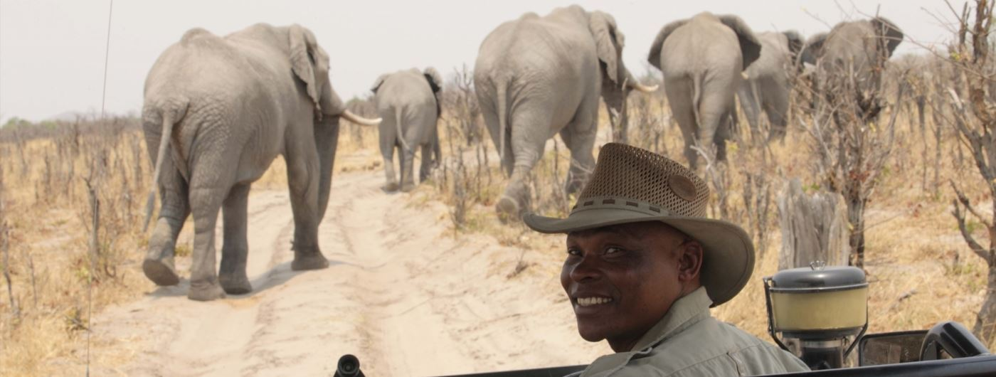 Game drive at andBeyond Savute Under Canvas