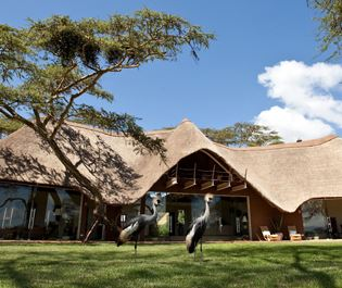 Solio Lodge thatched cottages