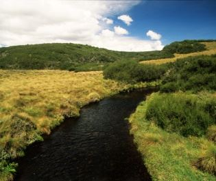 Aberdare National Park - getty