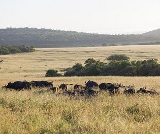Phinda Game Reserve