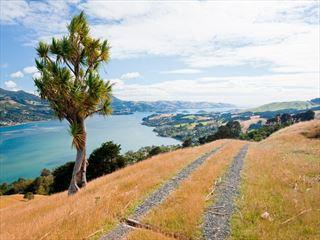 Dunedin coastal scenery