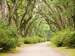 Road leading to a Louisiana planation