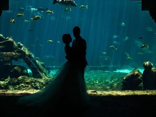 Wonderful wedding photo opportunities