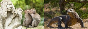 Monkey Forest and komodo dragons