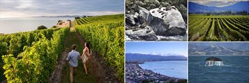 Blenheim Vineyards, Seal Colony on the Rocks & Sights in Kaikoura