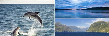 Bottlenose Dolphins, Lake Manapouri & Doubtful Sound