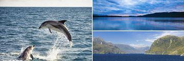 Bottlenose Dolphins, Lake Manapouri & Doubtful Sound