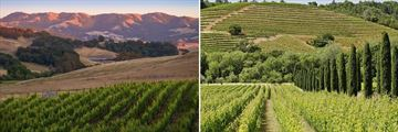 Californian Wine Country