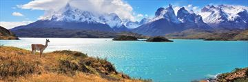 Stunning scenery and wildlife in Chile