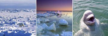 Stunning Scenery & Wildlife in Churchill, Manitoba