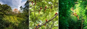 Coffee Plantation, Macaws & Zip-line Canopy Tour
