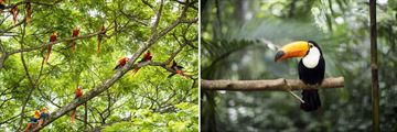 Costa Rican Macaws and Toucan Birdlife