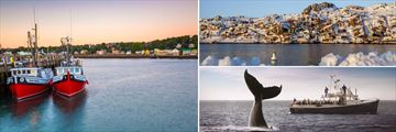 Digby, St John & Whale Watching Tour