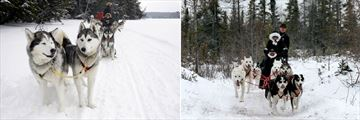 Dog Sledding Excursion, Manitoba