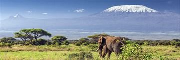 Elephant and Mt Kilimanjaro, Amboseli National Park