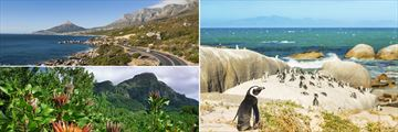 Garden Route near Cape Town, Kirstenbosch Botanical Gardens & Colony of penguins on Boulders Beach