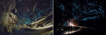 Beautiful Glow Worm Cave Tour in Auckland