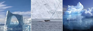 Greenland landscapes & whale sighting