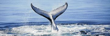 Whale sightings in Hervey Bay, Fraser Island