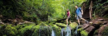 Hiking through Fundy National Park, New Brunswick