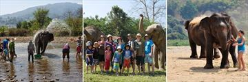 Elephant Interactions at the Elephant Nature Park