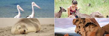 Kangaroo Island wildlife and nature