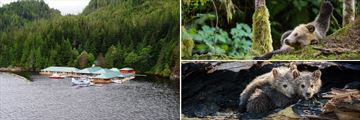 The Lodge & Bear Sightings at Knight Inlet