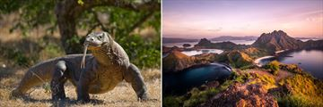 Komodo dragons and Padar Islands