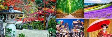 Land of the Rising Sun; Autumn Miyajima Japan, Arashiyama Bamboo Forest, Rainbow Flower fields Hokkaido, Young Maiko Geisha, Kabukicho at night