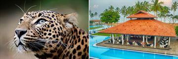 Leopard Safari & Club Hotel Dolphin