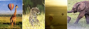 Masai Mara wildlife & landscapes
