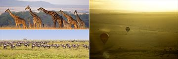Masai Mara wildebeeste, giraffes and hot air balloons