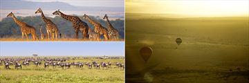 Masai Mara wildebeeste, giraffes and hot air balloons