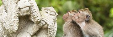 The Monkey Forest in Ubud