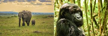 Elephants in the Masai Mara & Gorilla in Rwanda