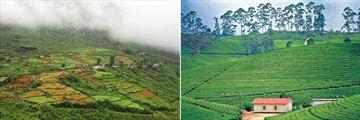 Nuwara Eliya landscapes & Sri Lankan tea plantation