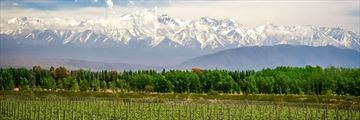 Organic vineyard near Mendoza