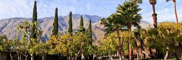 Palm Springs flora