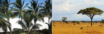 Papillon Beach & Tsavo East National Park