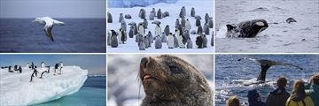 Phenomenal Wildlife Opportunities in the Antarctic